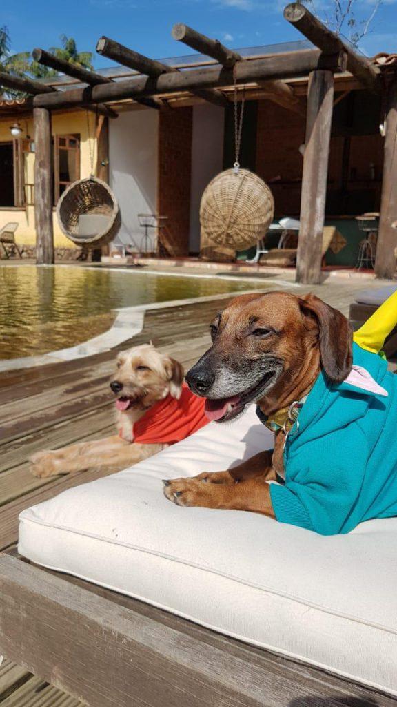 Cães relaxando na espreguiçadeira