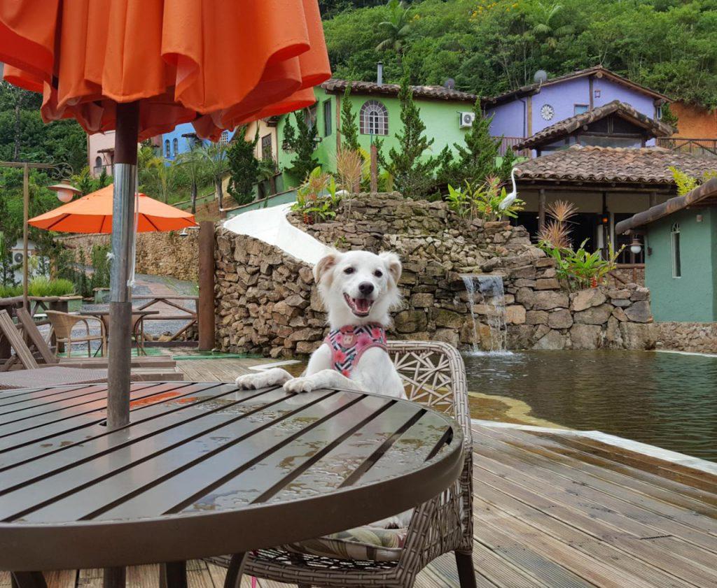 Cão aguarda seu pedido à mesa
