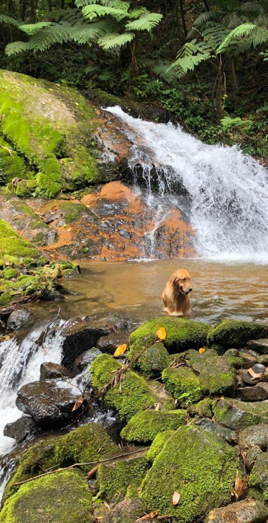 Cão na cachoeira da pousada