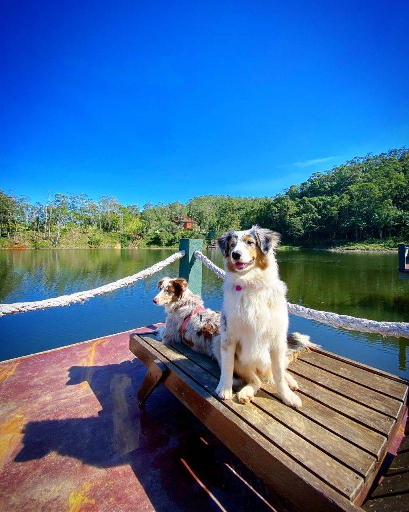 Cães pegando sol próximos ao lago