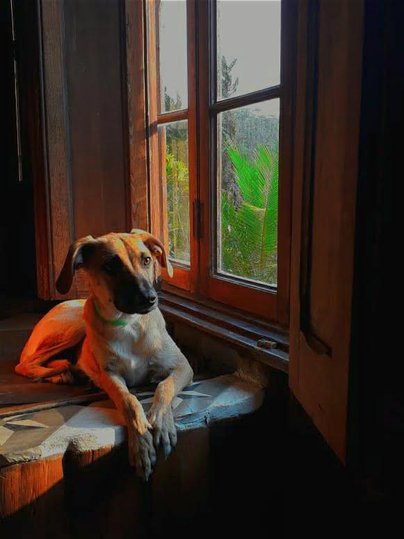 Cão aprecia vista da suíte