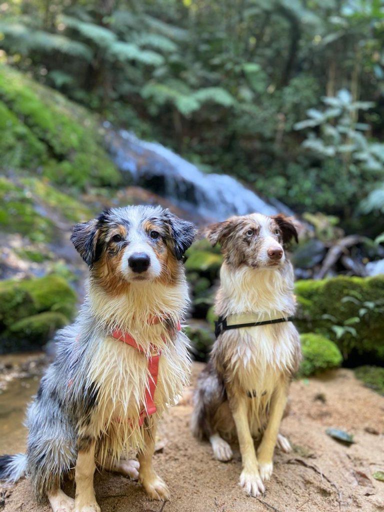 Dupla de cães na cachoeira da pousada